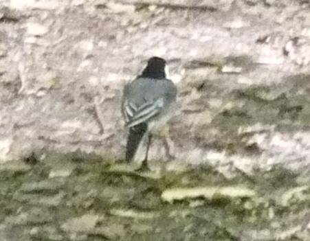 ...птиц орнитофауны Нижегородской области - гнездящихся, зимующих, пролетных, залетных
